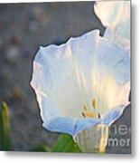 Loco Weed Flowers 1 Metal Print