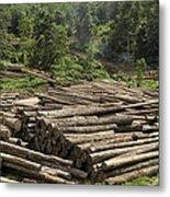 Logs In Logging Area, Danum Valley Metal Print