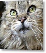 Lolas Whiskers Metal Print