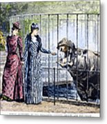 London Zoo, 1891 Metal Print