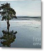 Lone Cypress Tree In Water.  Metal Print