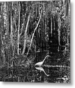 Lone Egret Black And White Metal Print
