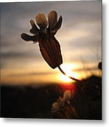 Lone Flower Metal Print by Victoria Hillman