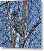 Lone Gray Owl Metal Print
