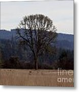 Lone Meadow Metal Print