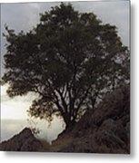 Lone Oak 2 Metal Print