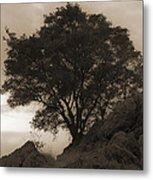 Lone Oak 2 Sepia Metal Print