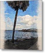 Lone Palm Tree Metal Print