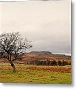 Lone Tree And Higger Tor Metal Print by Siobhan Brennan-Raymond