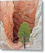 Lone Tree At Bryce National Park Metal Print