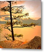 Lone Tree At Ellison Park Metal Print