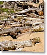 Lonely Driftwood Metal Print