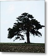Lonely Tree #1 Metal Print
