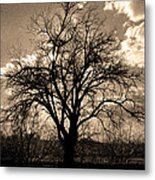 Lonely Tree At Sunset Metal Print by Sergio Aguayo