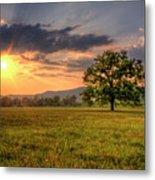 Lonely Tree In Field Metal Print
