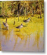 Long Billed Dowitchers Migrating Metal Print