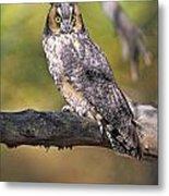 Long Eared Owl On Branch Metal Print