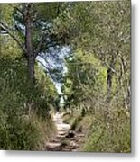 Long Forest Road Metal Print