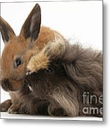 Long-haired Guinea Pig And Young Rabbit Metal Print