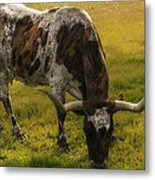 Long Horn Mid Fall Metal Print by Kelly Rader