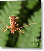 Long-horned Beetle In Flight Metal Print