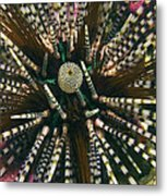 Long Spined Sea Urchin Metal Print