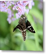 Long Tailed Skipper - Urbanus Proteus Metal Print