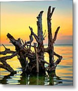 Longboat Key Tree Metal Print