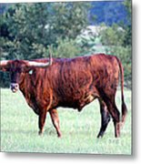 Longhorn Of Texas Metal Print