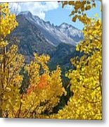 Long's Peak And The Keyboard Of The Winds Amidst Aspen Gold Metal Print by Margaret Bobb