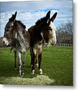 Look Both Ways Metal Print