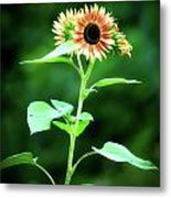 Look On The Bright Side Metal Print