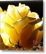 Look On The Bright Side  Metal Print by Carol Groenen