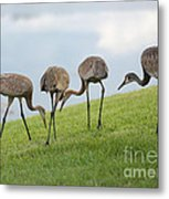Look What I Found Metal Print by Carol Groenen
