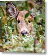Look What I Found In My Garden Metal Print