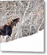 Looking For Supper Metal Print