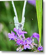 Looking Into Butterfly Eyes Metal Print