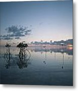 Looking Out To Sea Past Mangrove Shoots Metal Print