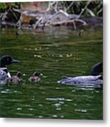 Loons With Twins Metal Print