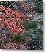 Lost Maples Fall Afternoon Metal Print