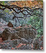Lost Maples Hiking Trail Metal Print