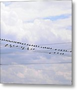 Lots Of Birds On Wires Metal Print