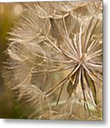 Lots Of Wishes Metal Print