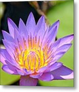 Lotus Aglow Metal Print