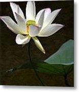 Lotus Beauty Metal Print