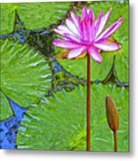 Lotus Blossom And Water Lily Pads Metal Print