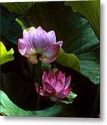 Lotus--dimensions 20h Metal Print