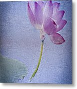 Lotus Dream Metal Print by Jill Balsam