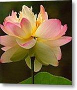 Lotus In The Dark Water Metal Print
