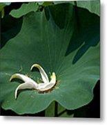 Lotus Leaf--castoff IIi Dl060 Metal Print
